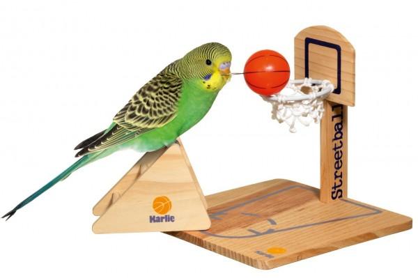 Intelligenzspielzeug für Vögel - Streetball