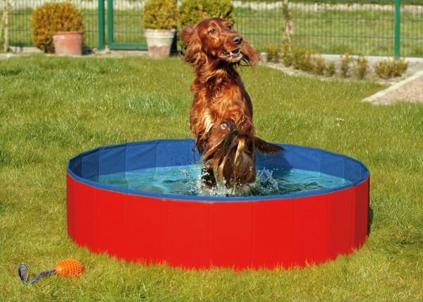 Hundepool Rot-Blau
