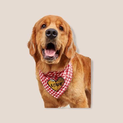 Hundehalstuch Golden Heart