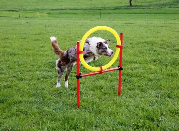 Agility Zubehör für den Hundesport als Komplettset