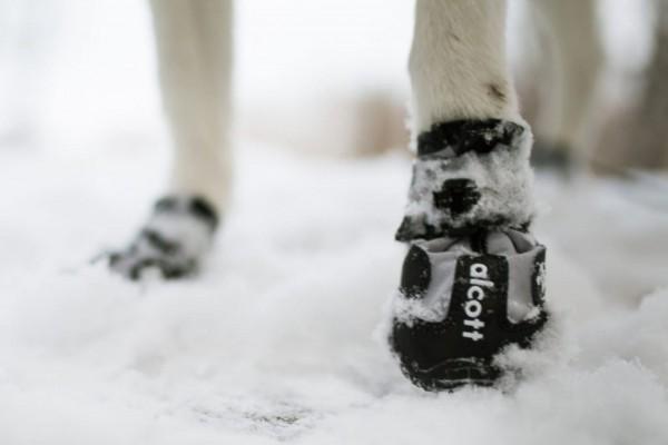 alcott Schuhe und Pfotenschutz für Hunde