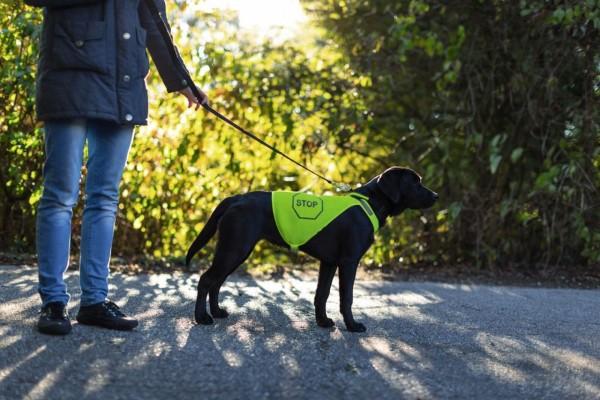 Sicherheitsweste neongelb für Hunde