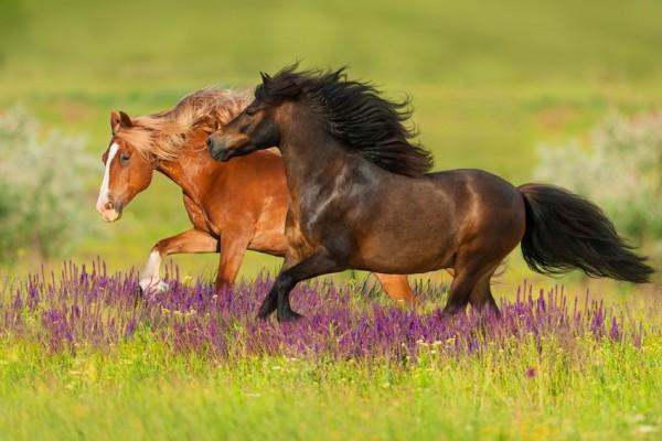 magengesch-re-beim-pferd-meinhaustiershop