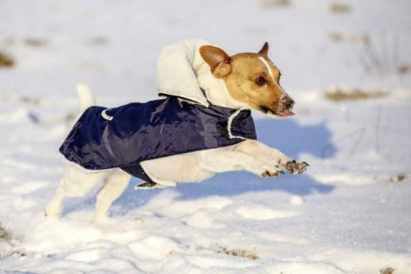Hundemantel Teddy für kalte Wintertage