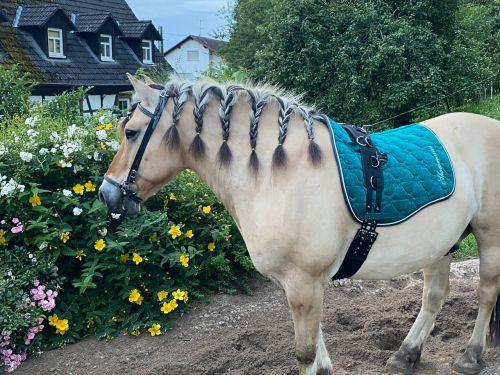 longiergurt-pony-meinhaustiershop
