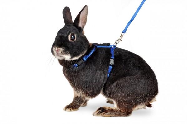 Art Sportiv Plus Kaninchengeschirr und -Leine