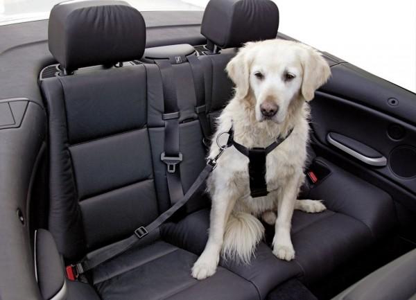 Autohundegeschirr für Hunde