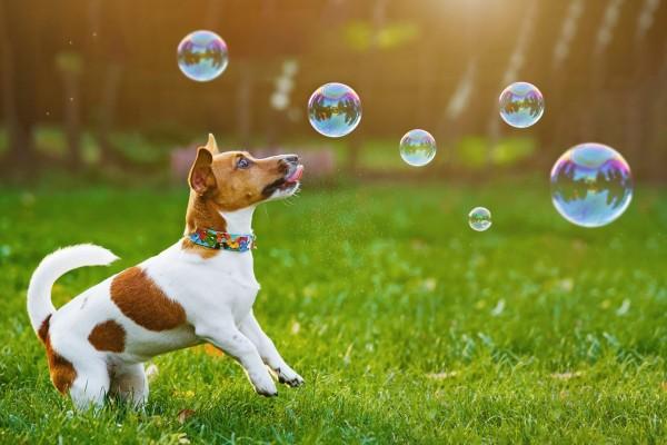 Dog Comets Seifenblasen für Hunde
