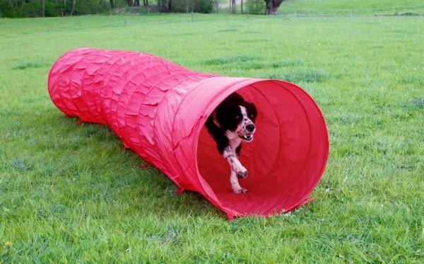 Hundetunnel für den Agility Hundesport