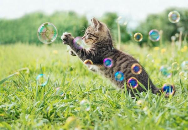 Cat Comets Seifenblasen für Katzen