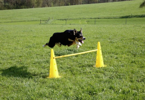 Pylonen-Hürden Set Agility für den Hundesport