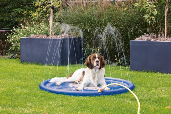 Splashy Matte Hundepool