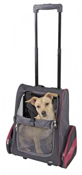 Hunde Trolley Vacation