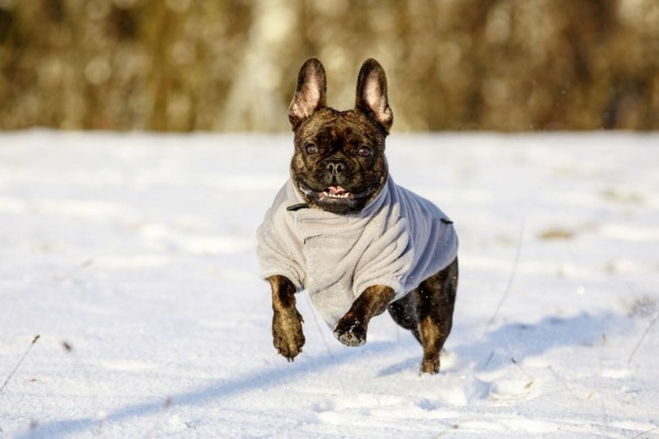 Warmer Fleecemantel Bern für Hunde