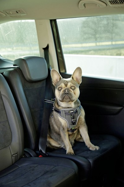 Auto Sicherheitsgeschirr für Hunde