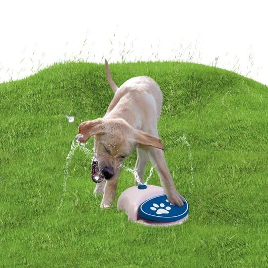 Coolpets Wasserspielzeug Fontäne für Hunde