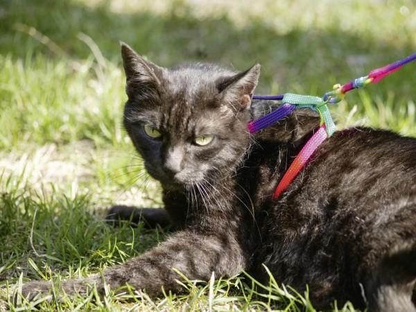Nylon Katzengeschirr Rainbow inklusive Leine