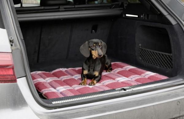 Reisematte Royal Pets ideal für unterwegs