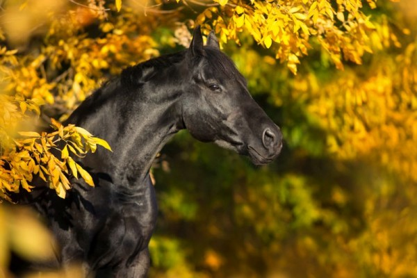pferd-meinhaustiershop-blog